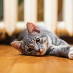 cat on a floor