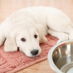 Pet-Proof Your Laminate and Carpet|Bigelow Flooring Guelph
