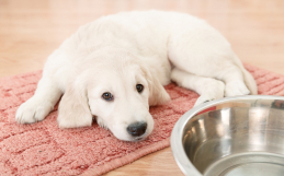 How to Pet-Proof Your Hardwood, Laminate, Carpet Floors and More