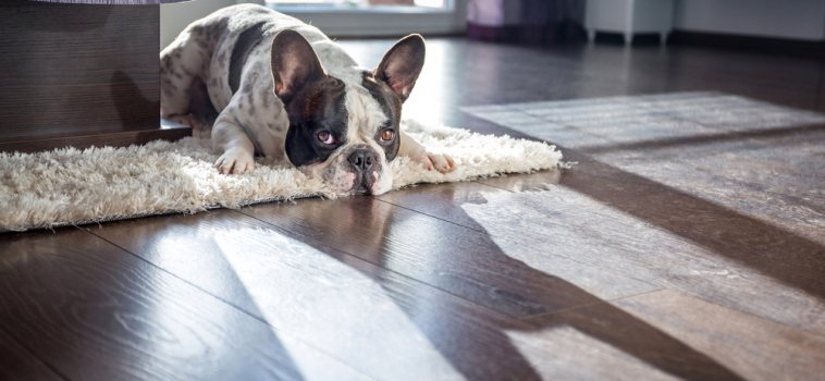 How to Clean Pet Hair from Your Floor